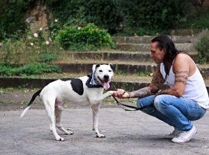 Ninjo Bunter Hund Kalender Bild von Laura Victoria